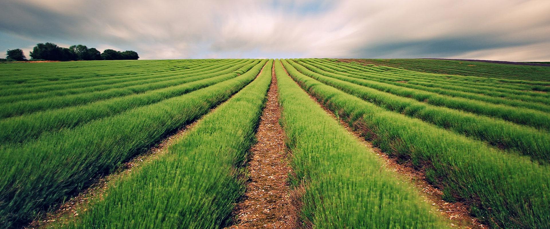 Παράταση ενός έτους για τις αιτήσεις εξαγοράς εκχερσωμένων δασικών εκτάσεων