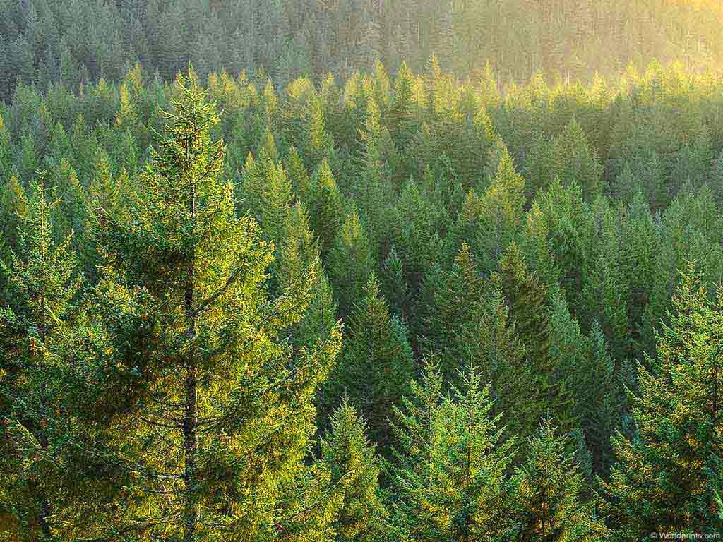 Πληροφορίες για το νέο νομοσχέδιο για τους δασικούς χάρτες