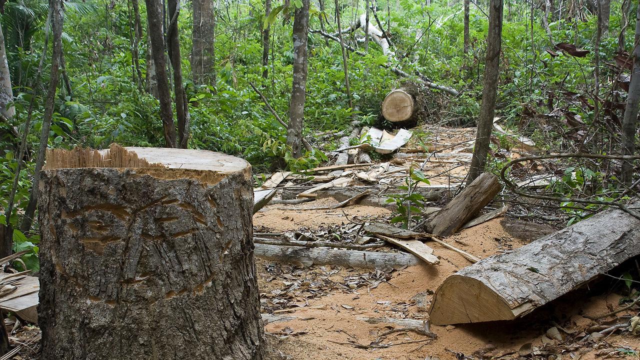 Μηδενική αποψίλωση των δασών ευελπιστεί να επιτύχει η Νορβηγία