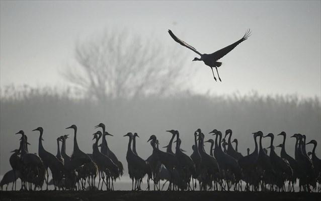 Τα νέα είδη εξελίσσονται με εντυπωσιακά ταχύ ρυθμό