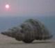 «Φιλί ζωής» για τα αυθαίρετα με τη βούλα του ΣτΕ - last post by apier